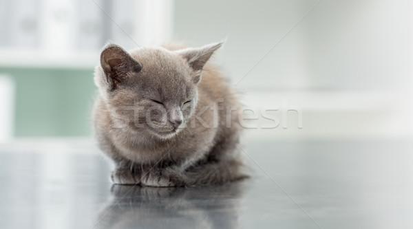 Stok fotoğraf: Kedi · yavrusu · veteriner · ofis · sevimli · gözleri · kapalı · kedi