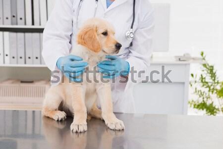 Zdjęcia stock: Uśmiechnięty · lekarz · weterynarii · cute · psa · medycznych