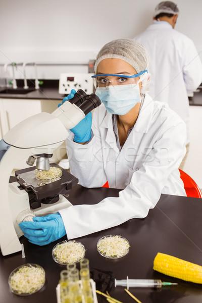 Food scientist looking at petri dish under microscope Stock photo © wavebreak_media