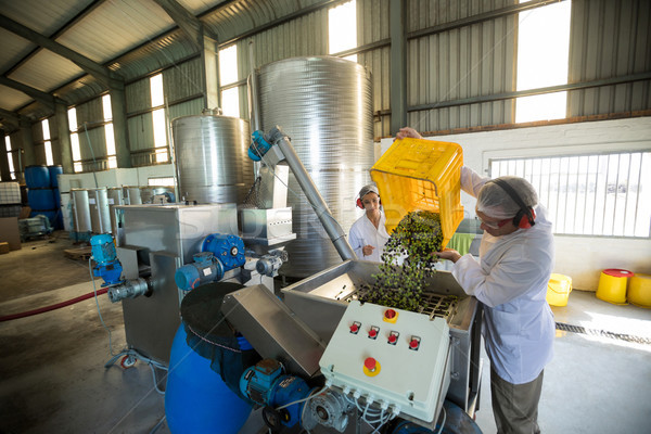 Workers working together near production line Stock photo © wavebreak_media