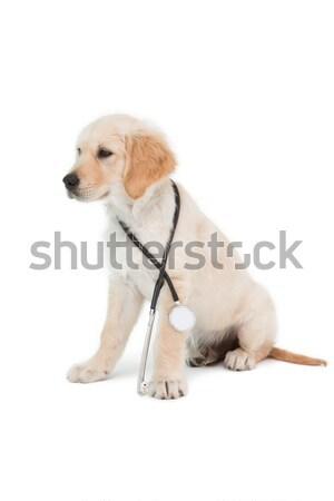 Cute puppy looking upwards Stock photo © wavebreak_media