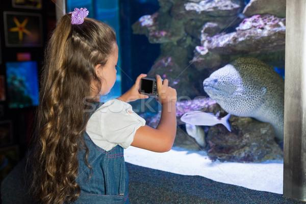 Bambina guardando pesce serbatoio acquario bambino Foto d'archivio © wavebreak_media