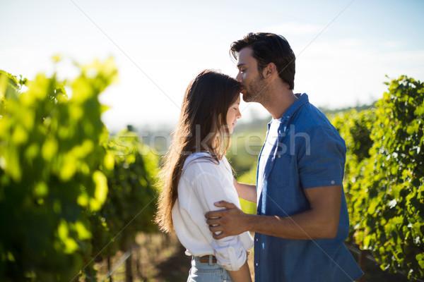 Oldalnézet férfi csók barátnő homlok szőlőskert Stock fotó © wavebreak_media