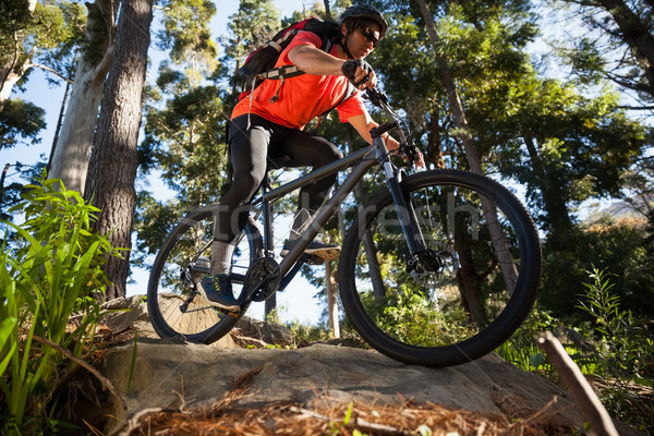Male mountain biker riding bicycle in the forest Stock photo © wavebreak_media