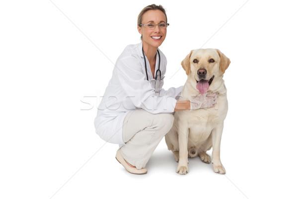 Csinos állatorvos citromsárga labrador kutya mosolyog Stock fotó © wavebreak_media