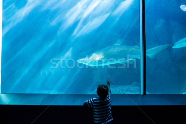 Young man pointing a shark with his hand Stock photo © wavebreak_media