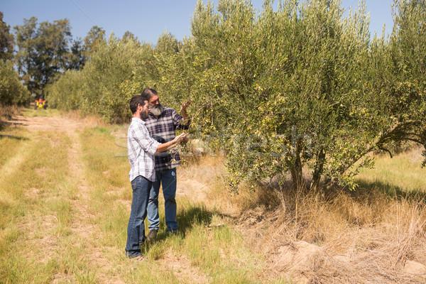 Friends examining olive on plant Stock photo © wavebreak_media