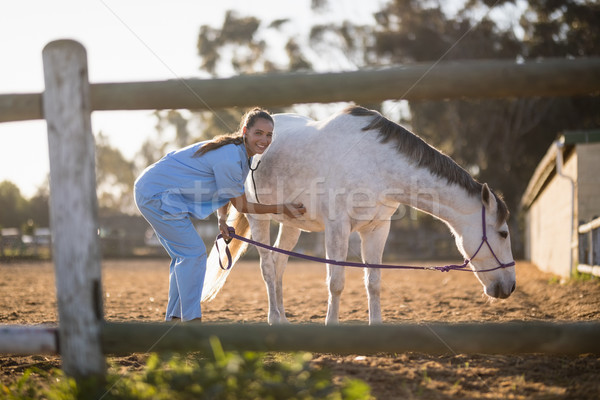 Portrait of female veterinarian examining horse Stock photo © wavebreak_media