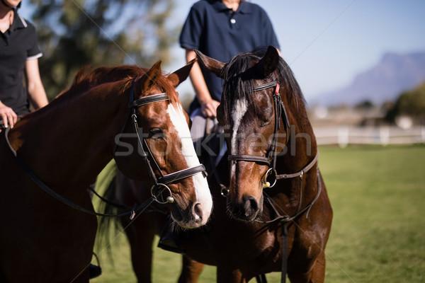 Amigos sessão cavalos celeiro feminino mulher Foto stock © wavebreak_media