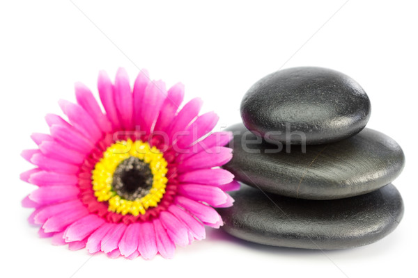 Pink and yellow flower and piled up pebbles on a white background Stock photo © wavebreak_media