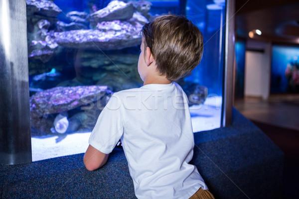 Moço olhando peixe tanque atrás câmera Foto stock © wavebreak_media