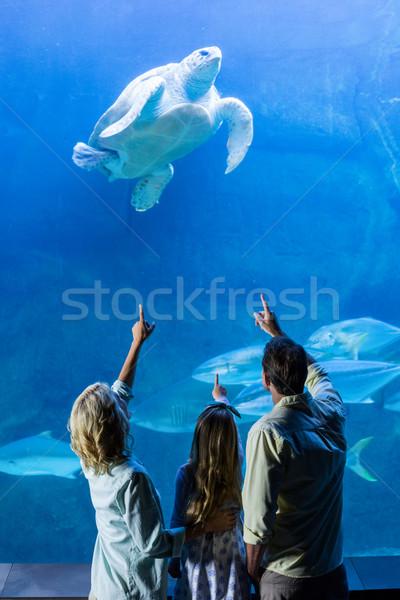 Família indicação tartaruga tanque aquário Foto stock © wavebreak_media