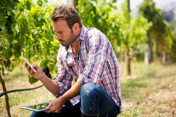 Férfi telefon tart tabletta szőlőskert fiatalember Stock fotó © wavebreak_media