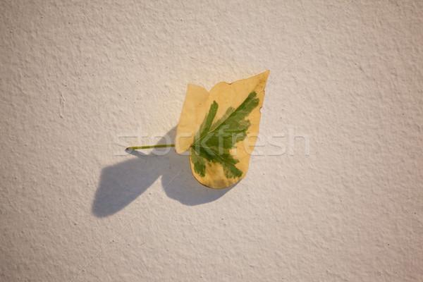 ősz búcsú fehér divat zöld ősz Stock fotó © wavebreak_media