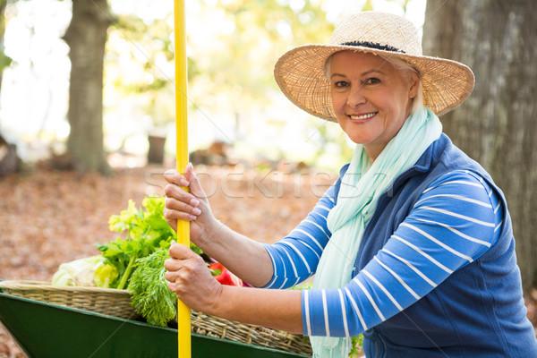 Portrait of confident gardener with tool and wheelbarrow at gard Stock photo © wavebreak_media