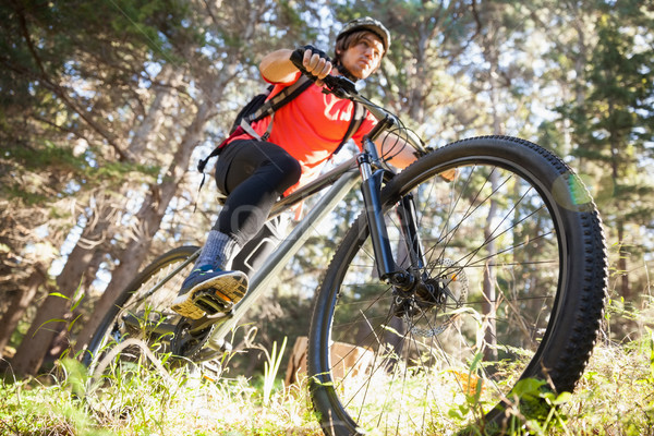 Erkek dağ binicilik bisiklet orman Stok fotoğraf © wavebreak_media