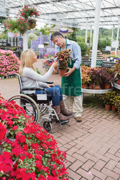 Woman in wheelchair buying a flower in garden centre Stock photo © wavebreak_media