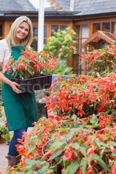 Alkalmazott hordoz dobozok növények kívül kert Stock fotó © wavebreak_media