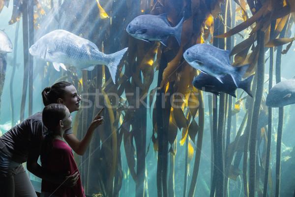 Feliz mãe filha olhando tanque aquário Foto stock © wavebreak_media