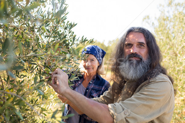 Portrait of confident couple harvesting olives Stock photo © wavebreak_media