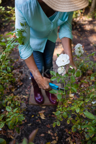 Low section of senior woman cutting flowers with pruning shears Stock photo © wavebreak_media