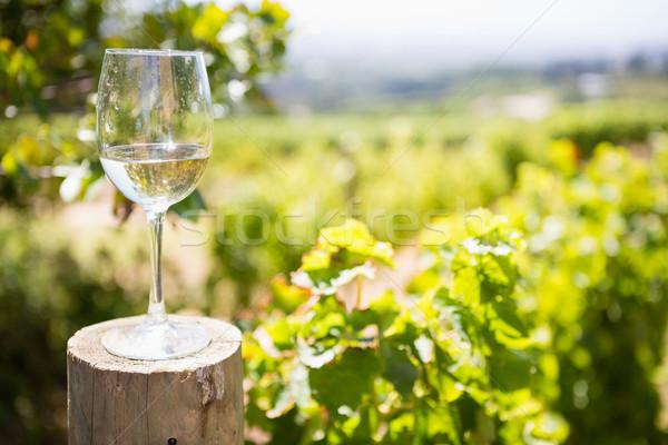 Glass of wine in vineyard Stock photo © wavebreak_media