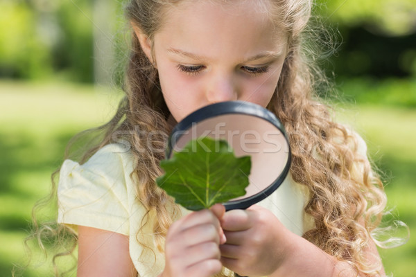 Girl examining leaf with magnifying glass at park Stock photo © wavebreak_media