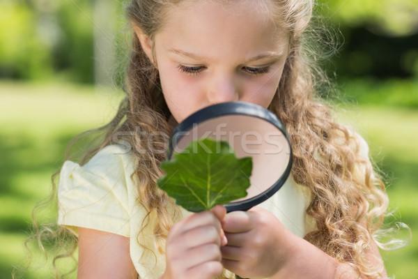 Meisje onderzoeken blad vergrootglas park jong meisje Stockfoto © wavebreak_media