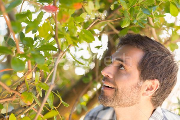 Heureux homme souriant arbre maison Photo stock © wavebreak_media