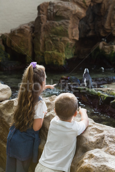 Little siblings looking at penguins Stock photo © wavebreak_media