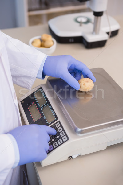 Scientist weighing potatoes  Stock photo © wavebreak_media