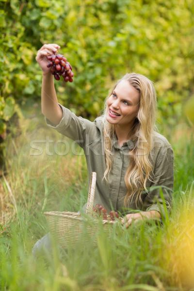 Blonde winegrower handing a red grape Stock photo © wavebreak_media