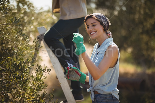 Girlfriend holding pliers while boyfriend climbing on ladder at olive farm Stock photo © wavebreak_media