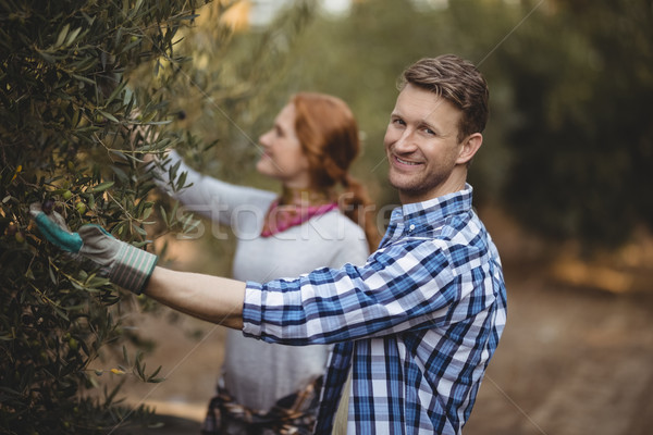 Handsome young man with woman plucking olives at farm Stock photo © wavebreak_media