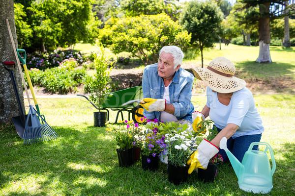 ガーデニング 公園 女性 高齢者 ストックフォト © wavebreak_media