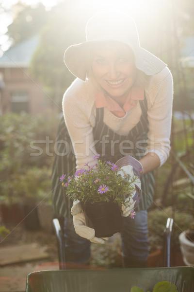 Female gardener holding potted plants over wheelbarrow  Stock photo © wavebreak_media