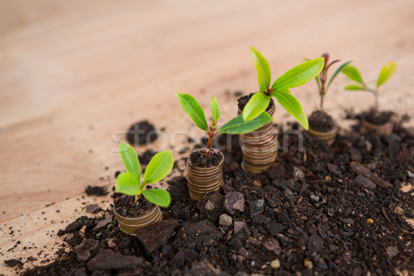 Close-up of plant grows from stack of coins Stock photo © wavebreak_media