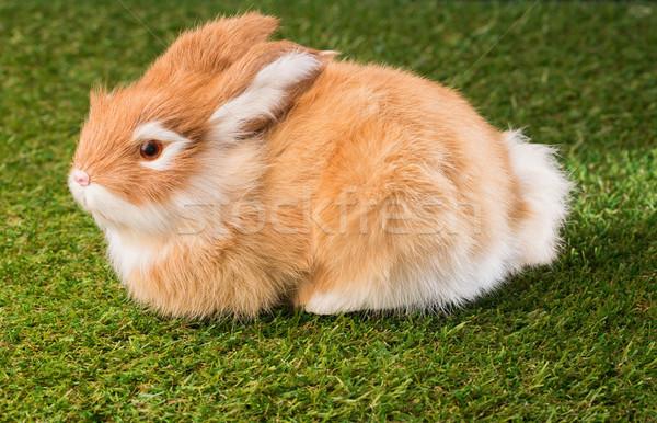 Gember bunny konijn groen gras Stockfoto © wavebreak_media