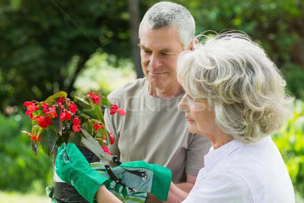 Maduro casal comprometido jardinagem vista lateral flor Foto stock © wavebreak_media