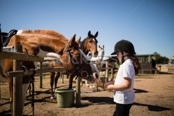 Girl feeding the horse in the ranch Stock photo © wavebreak_media