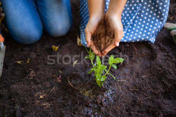 Meisje grootmoeder planten handen afbeelding Stockfoto © wavebreak_media