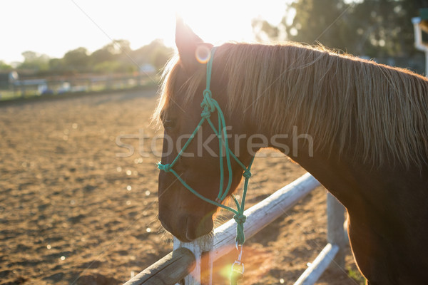 Cheval permanent ranch professionnels patient Photo stock © wavebreak_media