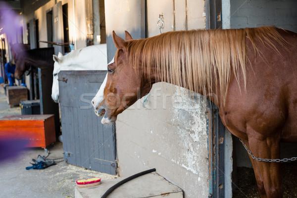 коричневый лошади стабильный счастливым праздник Сток-фото © wavebreak_media