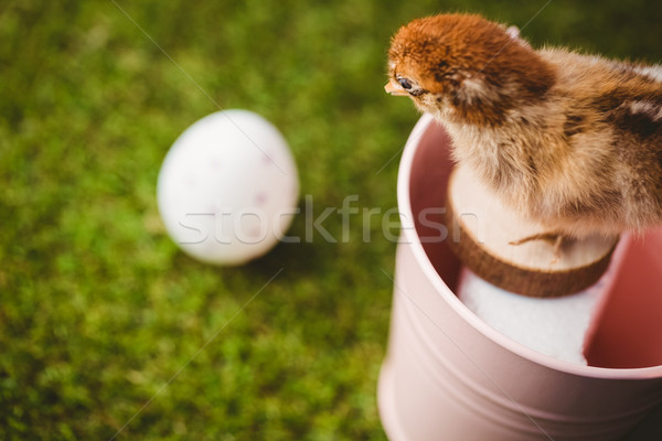 Gevuld chick roze emmer groen gras Stockfoto © wavebreak_media
