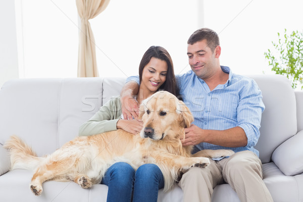 Couple stroking dog while sitting on sofa Stock photo © wavebreak_media