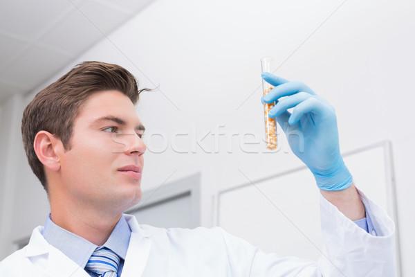 Scientifique tube à essai maïs à l'intérieur laboratoire Photo stock © wavebreak_media