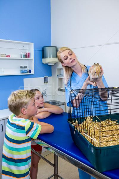 A woman vet bringing a rabbit Stock photo © wavebreak_media