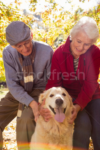 Starszych para domowych psa parku kobieta Zdjęcia stock © wavebreak_media
