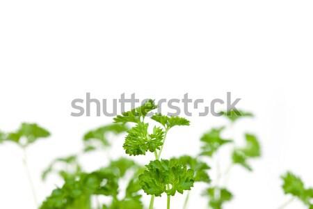 Chervil springs against a white background Stock photo © wavebreak_media