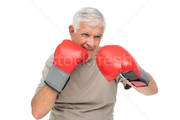 портрет определенный старший Боксер белый Сток-фото © wavebreak_media